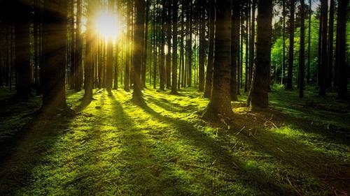 Infrarot Heizung – Hol dir die Sonne in deine Wohnung!