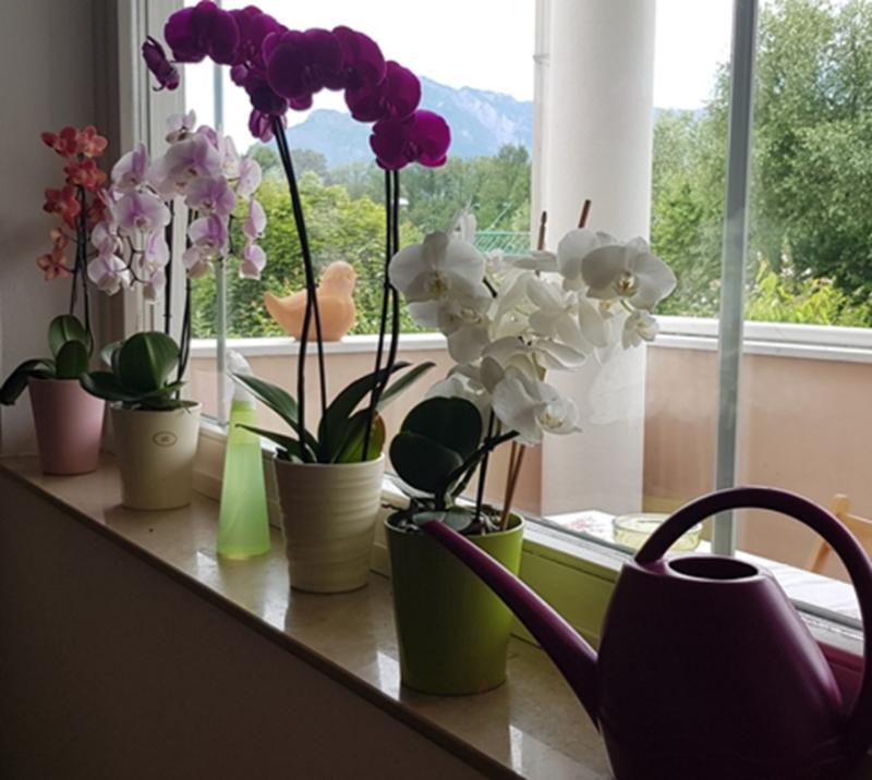 Orchideen im Wohnraum. Sie sind ein guter Indikator für eine optimale Luftfeuchtigkeit.